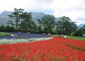 Kuju Flower Park
