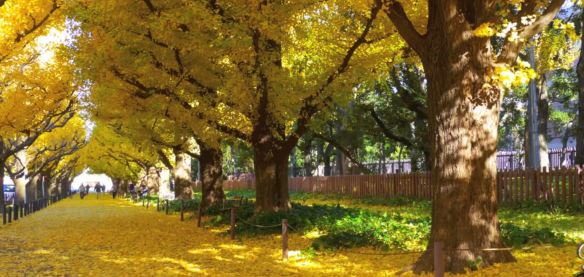 Meiji Jingu Gaien Park